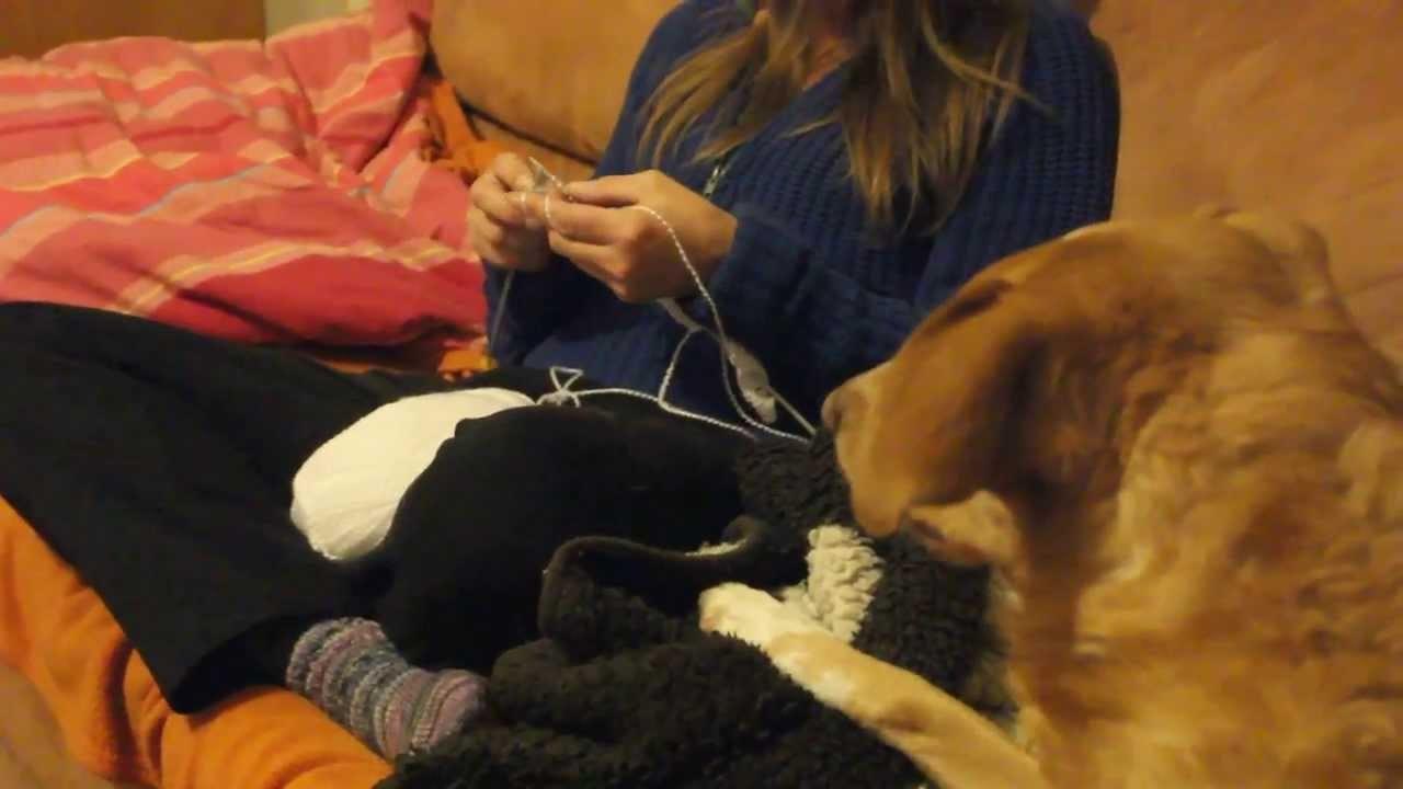Cat tries to knit - Katze strickt mit