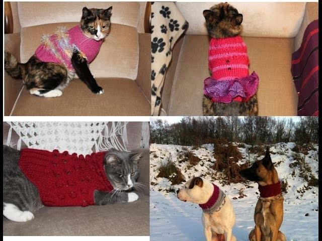 Hund ausmessen für Hundepullover*Hunde Mode*Knitting*Tutorial Handarbeit