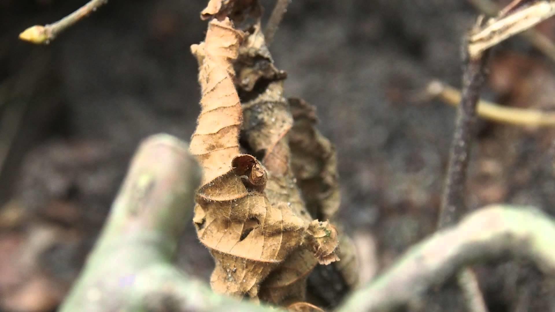 Farben - Herbst - Blätter - Häkeln und Stricken - (2)