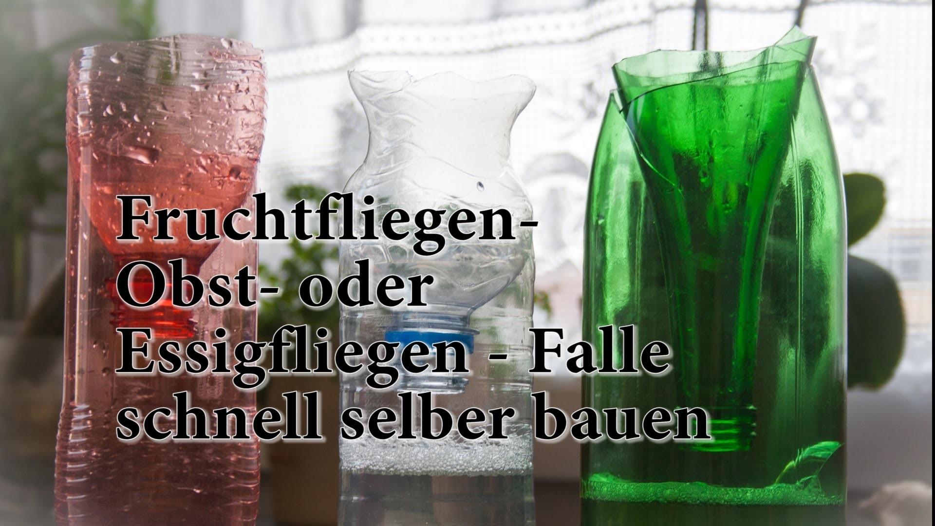 Fruchtfliegen - Falle aus PET Flasche basteln