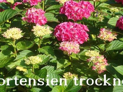 Hortensien trocknen  ❁ Deko Ideen mit Flora-Shop