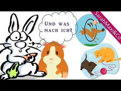 Beschäftigung für Kaninchen und Meerschweinchen #1 - Futterflasche, Heurollenleine, Futterleine