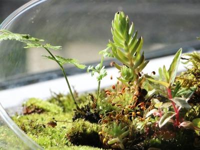 DIY Wurzel  Moos Terrarium selber machen