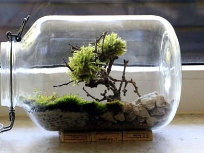 Bonsai Moosbaum Terrarium selber machen