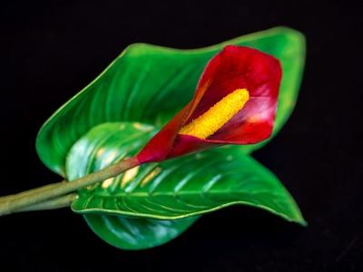 Calla Tutorial. Calla aus Blütenpaste in 7 Farbvarianten