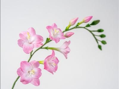 Freesien aus Blütenpaste. Freesien Tutorial*