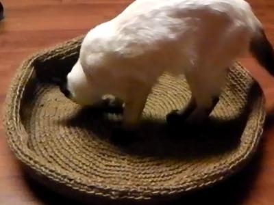 Anleitung Katzenkorb Hundekorb Korb häkeln - Häkelanleitung kostenlos