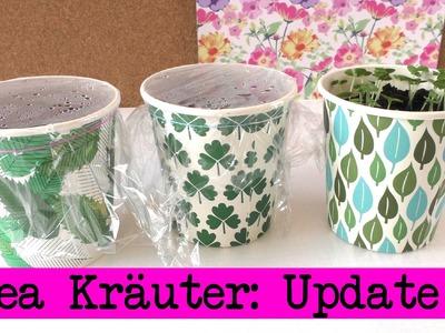 Ikea Kräuter Update: 1. Woche - eigene Kräuter züchten - Petersilie, Basilikum, Minze - DIY