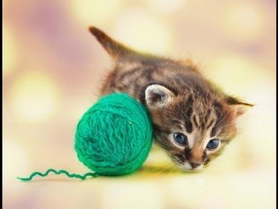 4. Dezember 2013 * Das Kätzchen und die Stricknadeln * nadelspiel Adventskalender