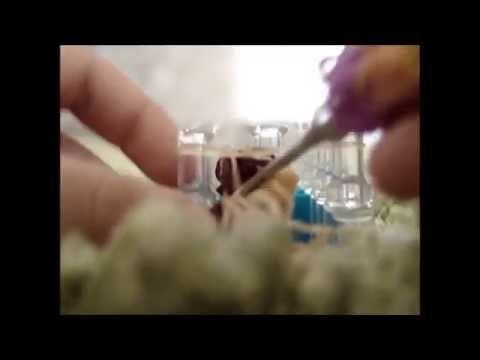 Rainbow Loom Schmetterlings-Armband (Deutsche Anleitung)