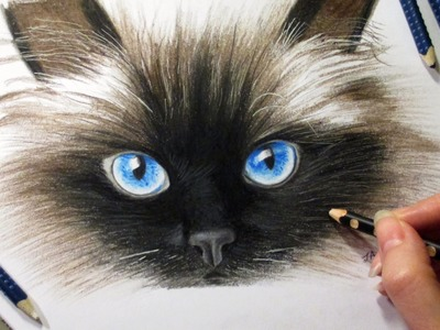 Drawing Cat's face in colored pencil ► How to draw a cat cómo dibujar un gato