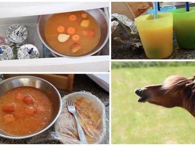 DiY Eis für Pferde! Pferde-Eis selber machen