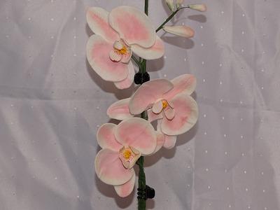 Orchidee (2.2)