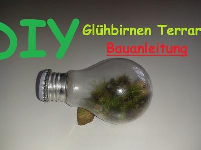 Ewiges Terrarium aus Glühbirne bauen. Mini Glühbirnen Terrarien selber machen – DIY Deko Anleitung