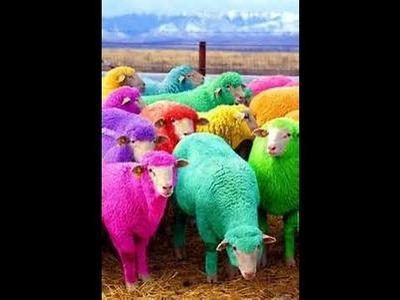 DIY #Wolle mit Eierfarbe färben