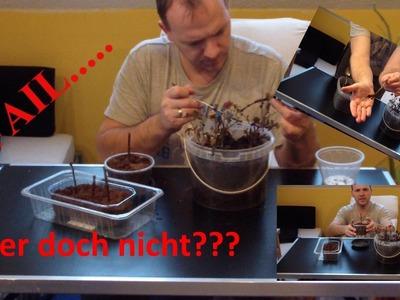 Update Johannisbeere Stecklinge. . FAIL. . .  DiY