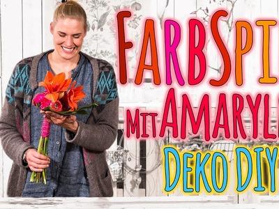 Farbspiel mit Amaryllis - Deko DIY