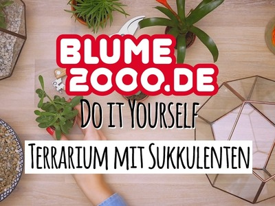 DIY | Geometrisches Terrarium  mit Sukkulenten | Blume2000.de